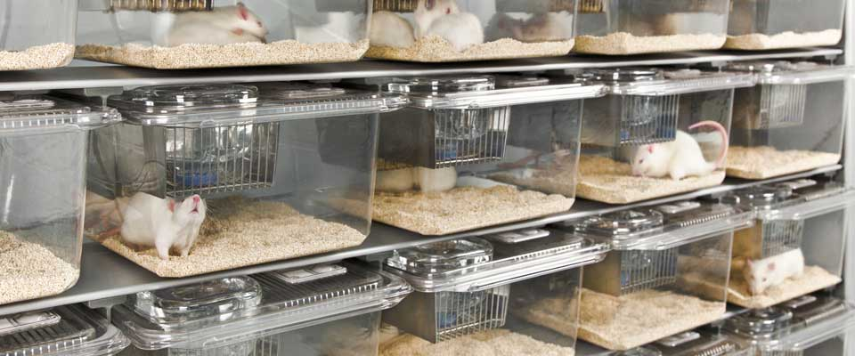 IVC Rat Racks | Innovive Disposable Cages, IVC Racks and